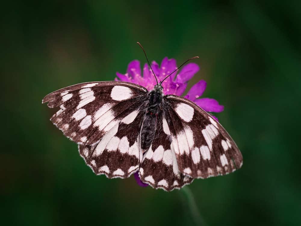 Oggi si celebra la giornata mondiale della lotta al Lupus