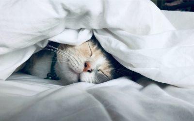 I benefici di una buona dormita