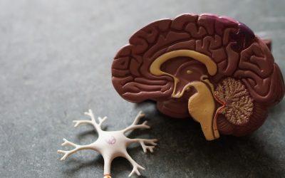 Cosa succede al cervello di una persona con la Malattia di Alzheimer?